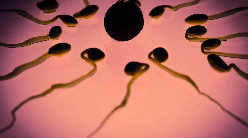 Spermien Qualität verbessern